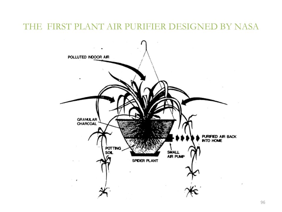 THE FIRST PLANT AIR PURIFIER DESIGNED BY NASA
