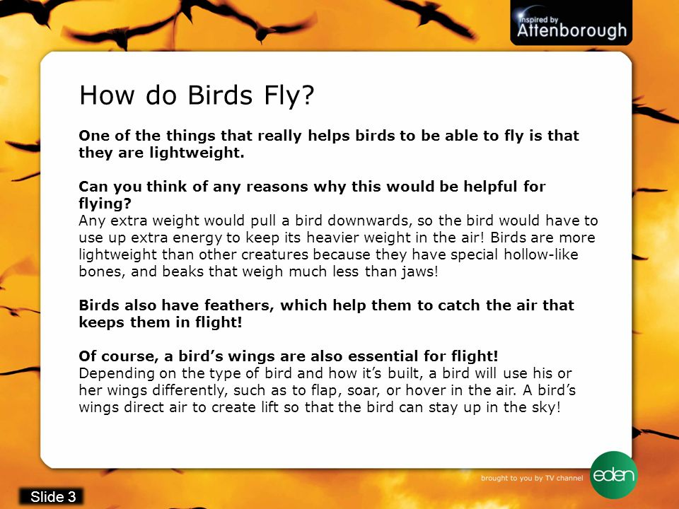 How do Birds Fly One of the things that really helps birds to be able to fly is that they are lightweight.