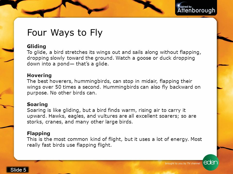 Four Ways to Fly