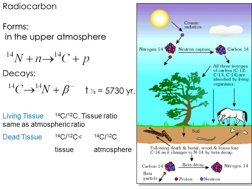 t ½ = 5730 yr. Radiocarbon Forms: in the upper atmosphere Decays: