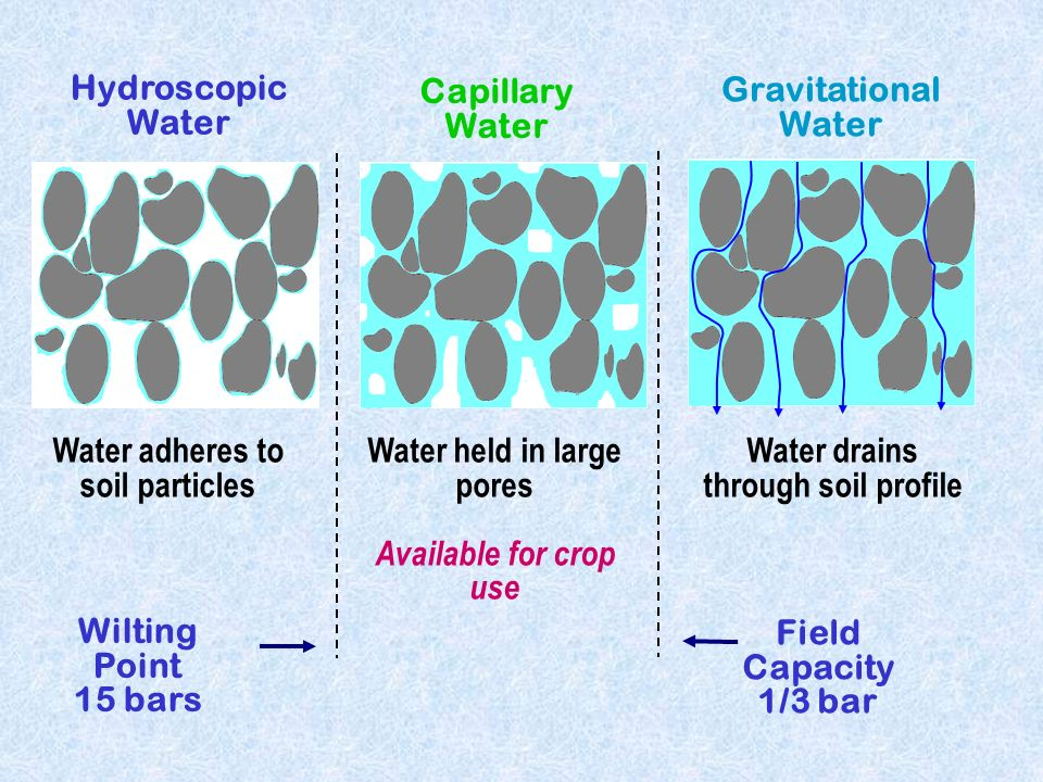 Soil water ppt video online download for What soil contains