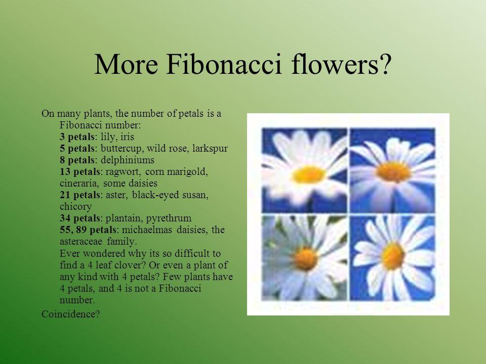 how to draw fibonacci flower