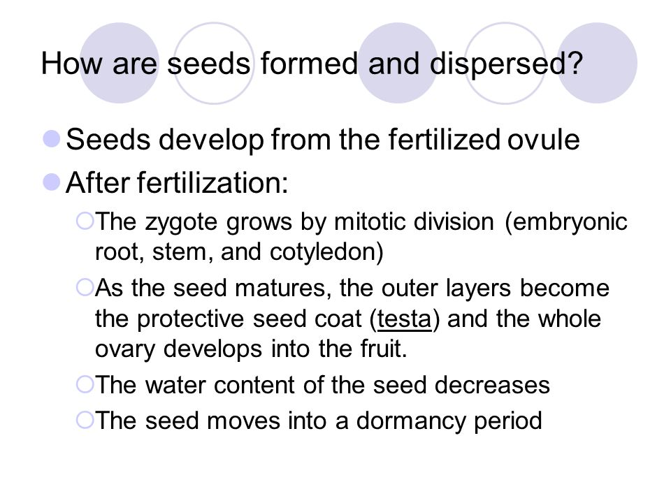 How are seeds formed and dispersed