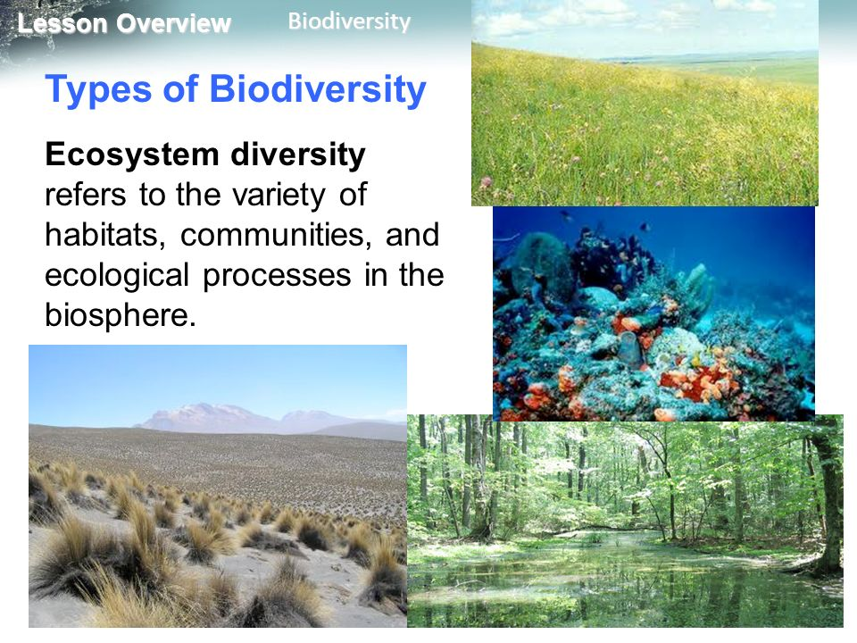 biomes an biodiversity Biodiversity refers to the variety of living organisms within a given area.