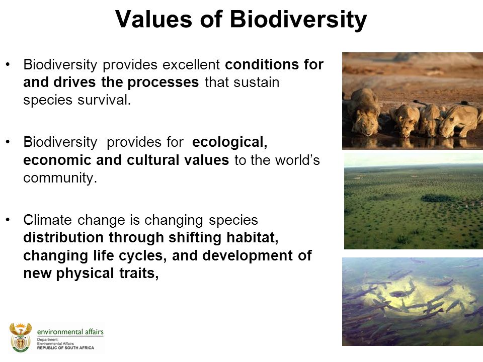 importance of biodiversity Many studies suggest that biodiversity may be particularly important for  ecosystem multifunctionality, because different species with different.