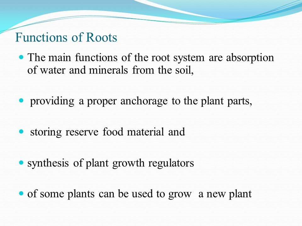 Plant Morphology Amp Physiology Ppt Video Online Download