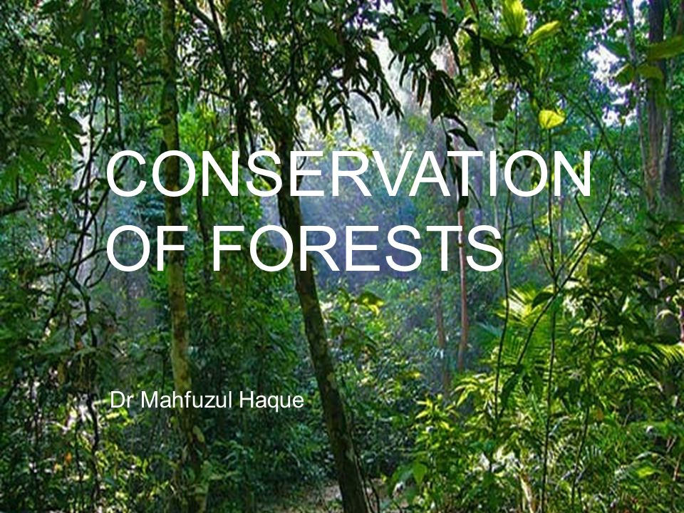 Why should you conserve forest and wildlife?