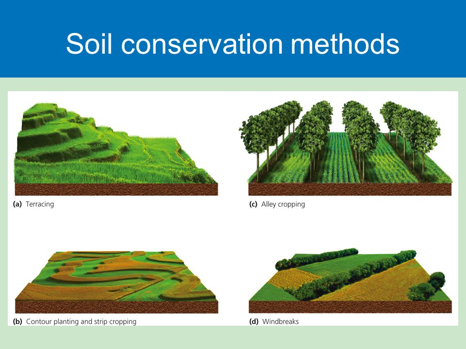 Food Soil And Pest Management Ppt Download