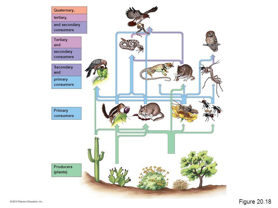 Quaternary consumer animals