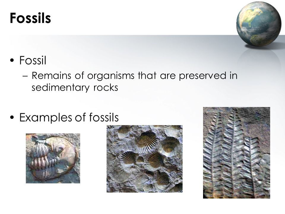 Fossils Fossil Examples of fossils