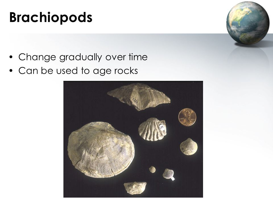 Brachiopods Change gradually over time Can be used to age rocks