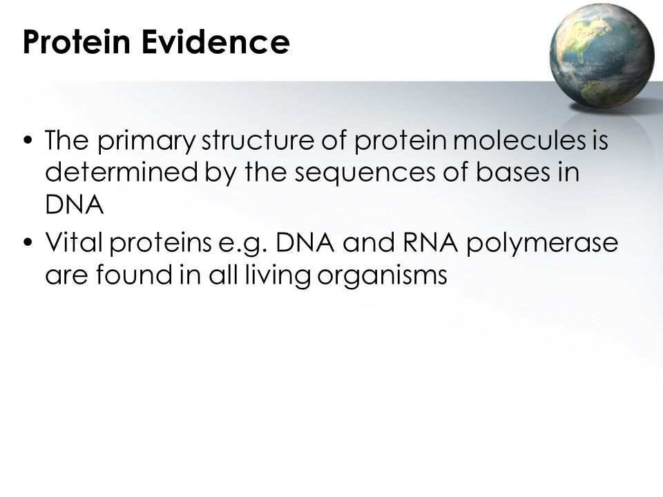 Protein Evidence The primary structure of protein molecules is determined by the sequences of bases in DNA.