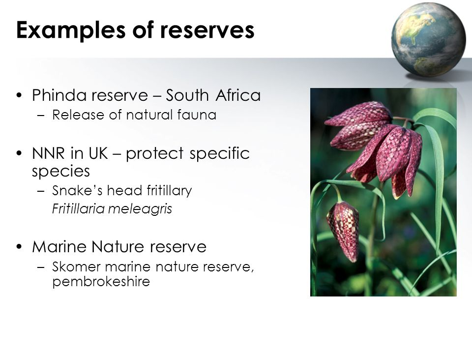 Examples of reserves Phinda reserve – South Africa