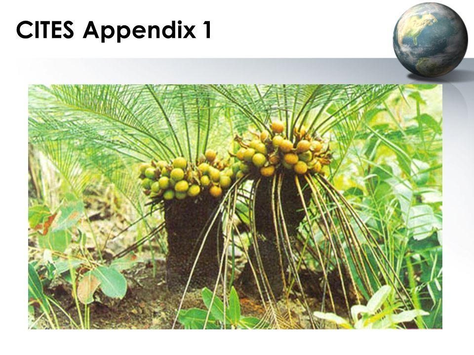 CITES Appendix 1