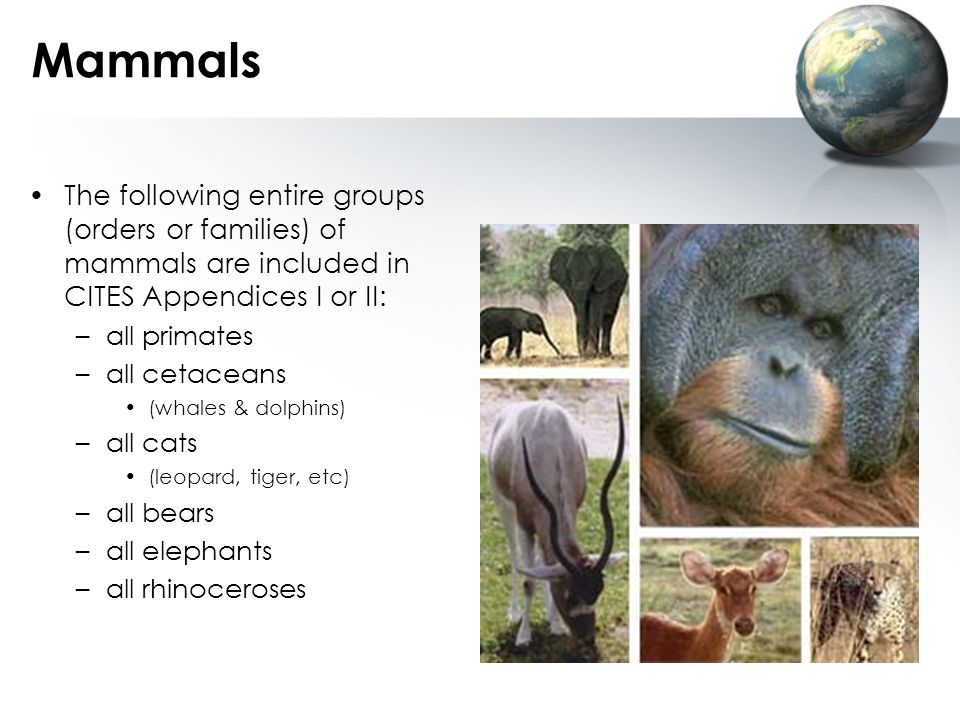 Mammals The following entire groups (orders or families) of mammals are included in CITES Appendices I or II: