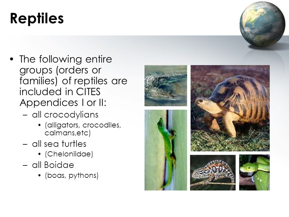 Reptiles The following entire groups (orders or families) of reptiles are included in CITES Appendices I or II: