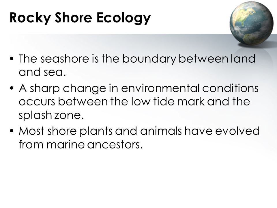 Rocky Shore Ecology The seashore is the boundary between land and sea.