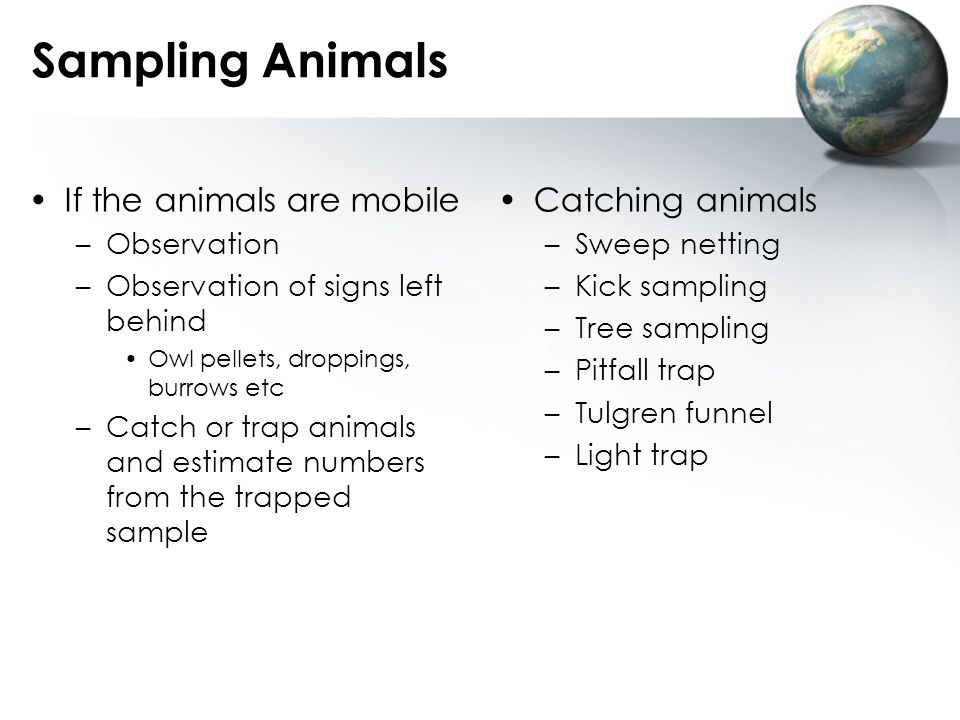 Sampling Animals If the animals are mobile Catching animals