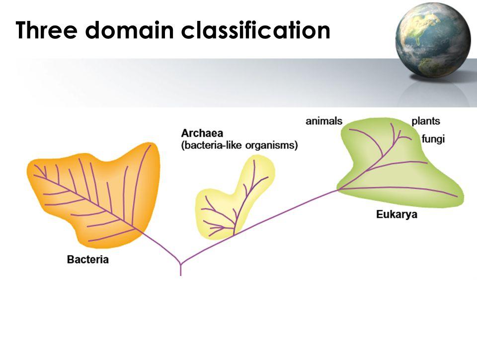 Three domain classification