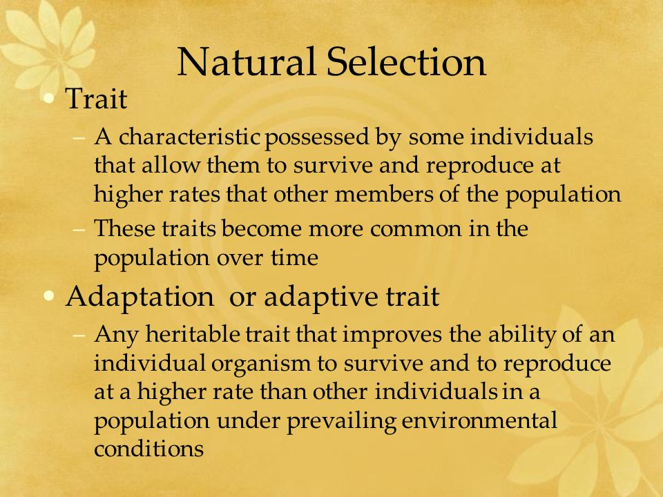 "the innate trait Trait approach description man"" theories because they focused on identifying the innate qualities and characteristics possessed by great social."