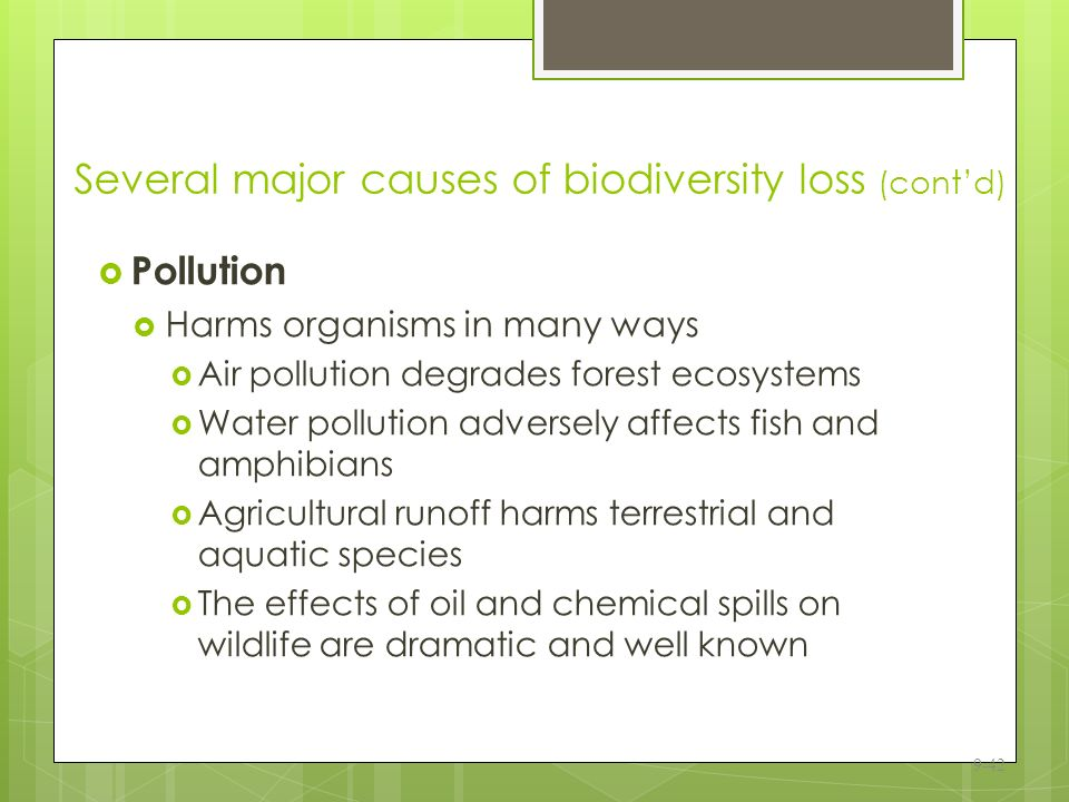 the impact of biodiversity loss A single wildfire is not always expected to have any impact on biodiversity,  what is the effect of wildfires on biodiversity  what is biodiversity loss.