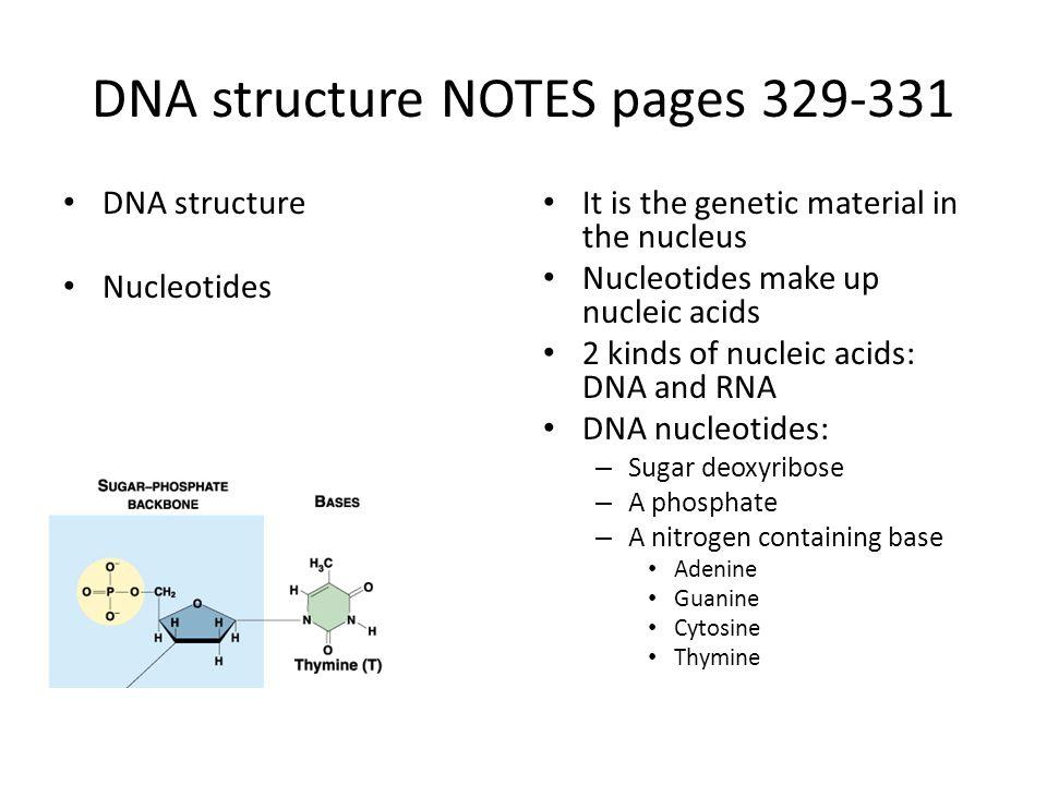 Biology worksheets pdf