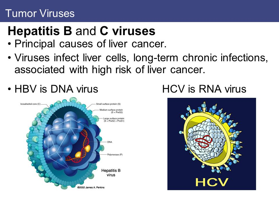 Hepatitis B and C viruses