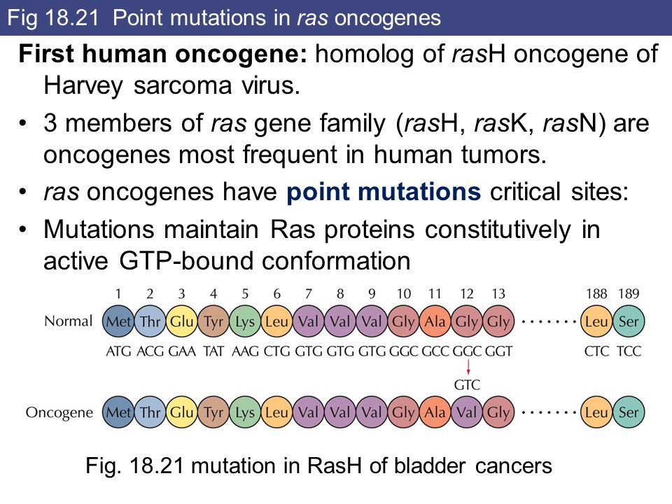 Fig Point mutations in ras oncogenes