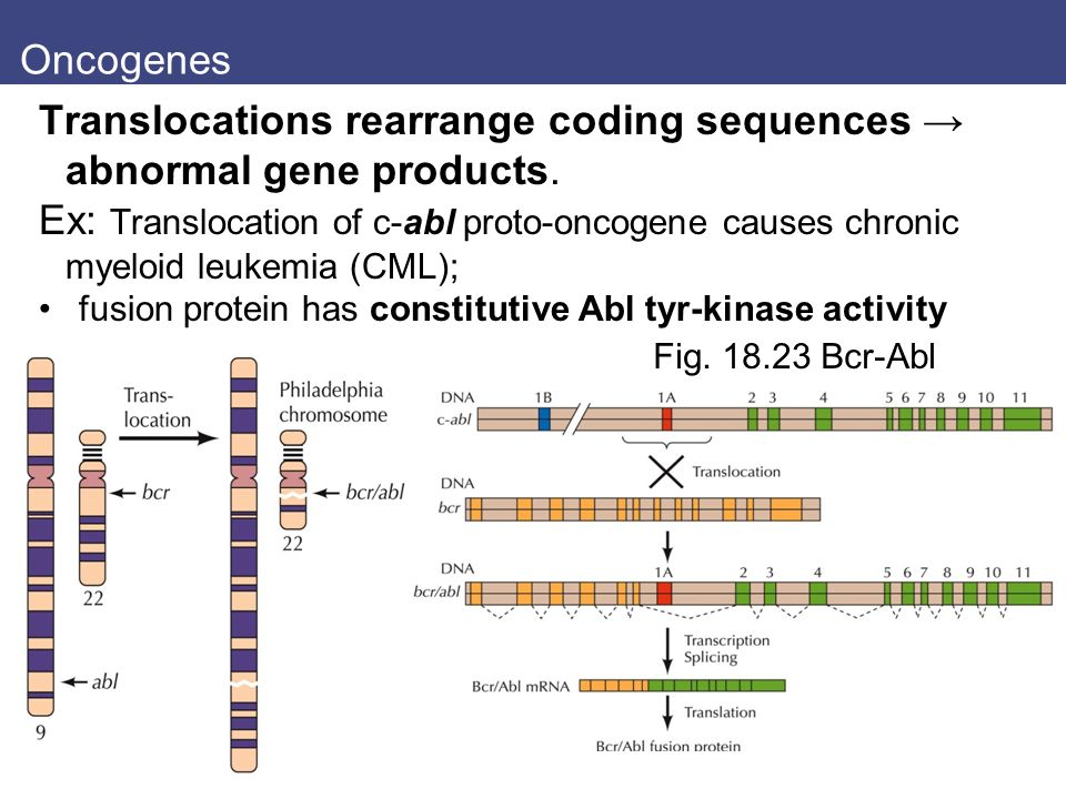 Translocations rearrange coding sequences → abnormal gene products.