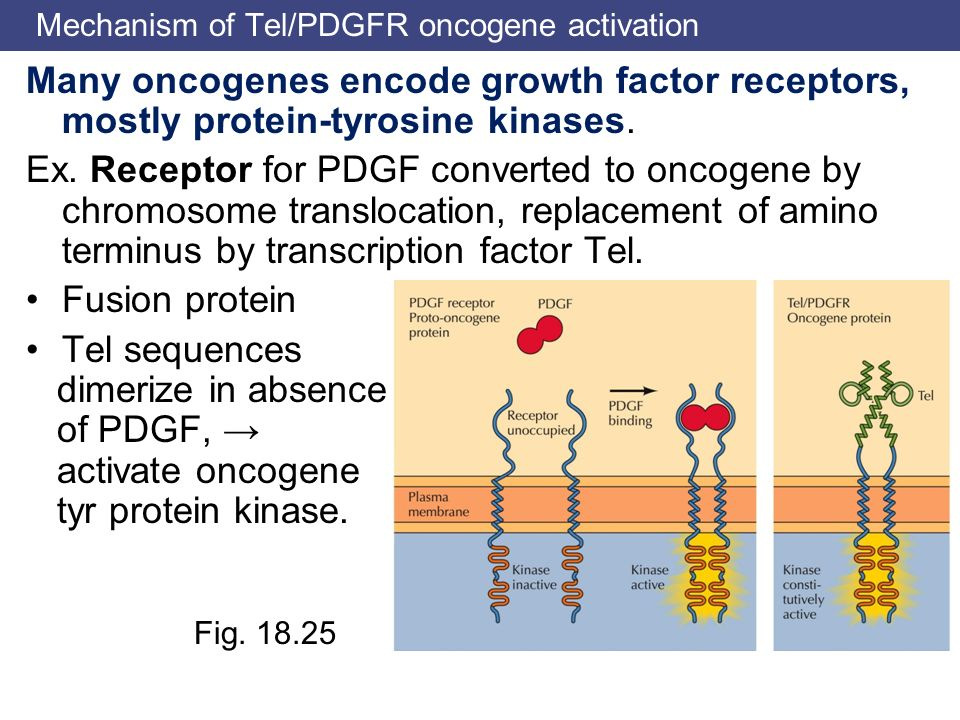 Mechanism of Tel/PDGFR oncogene activation