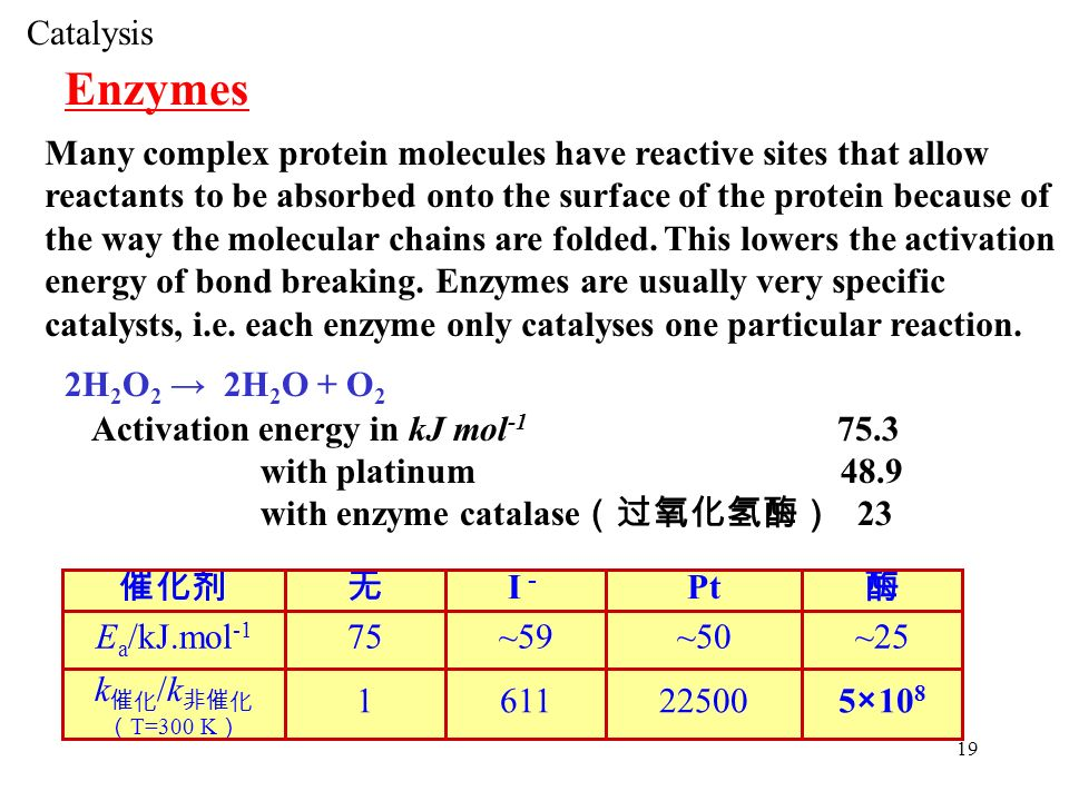effects of enzyme catalysis of h2o2