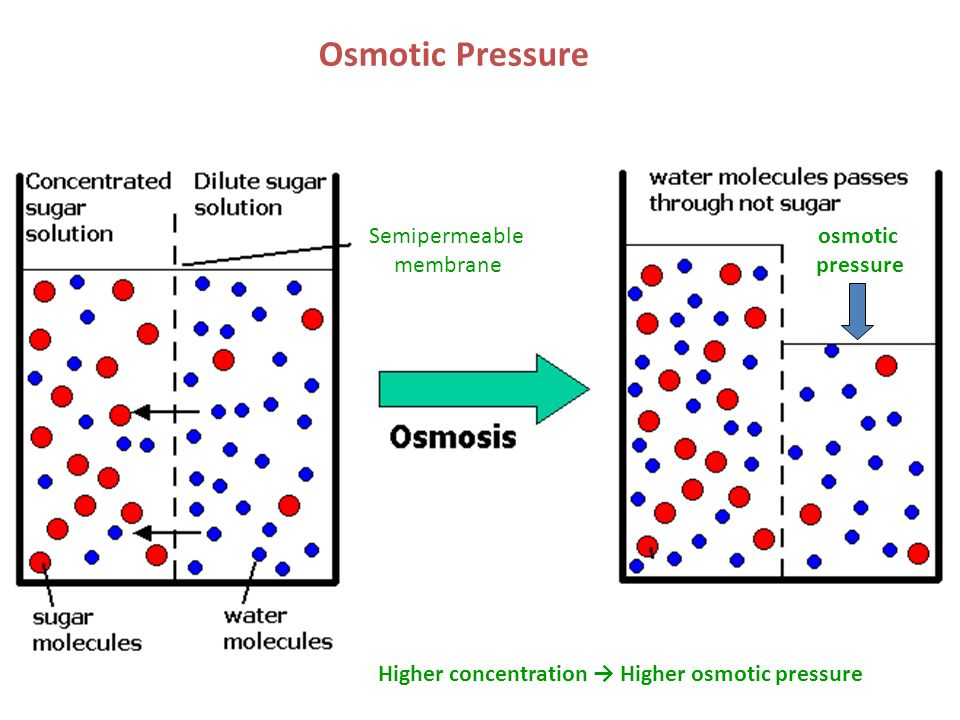osmosis in sugar solution Suppose you drop a lump of sugar eventually this pressure matches the osmotic pressure of the solution and chem1 osmosis and osmotic pressure covers.