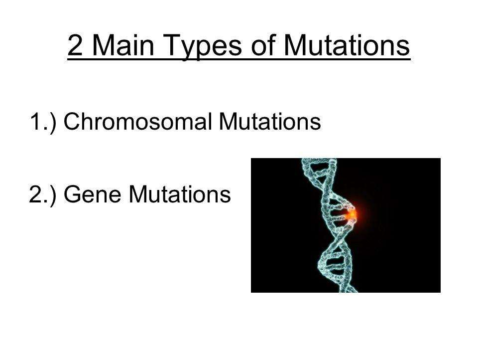Are Mutations Harmful  TalkOrigins Archive