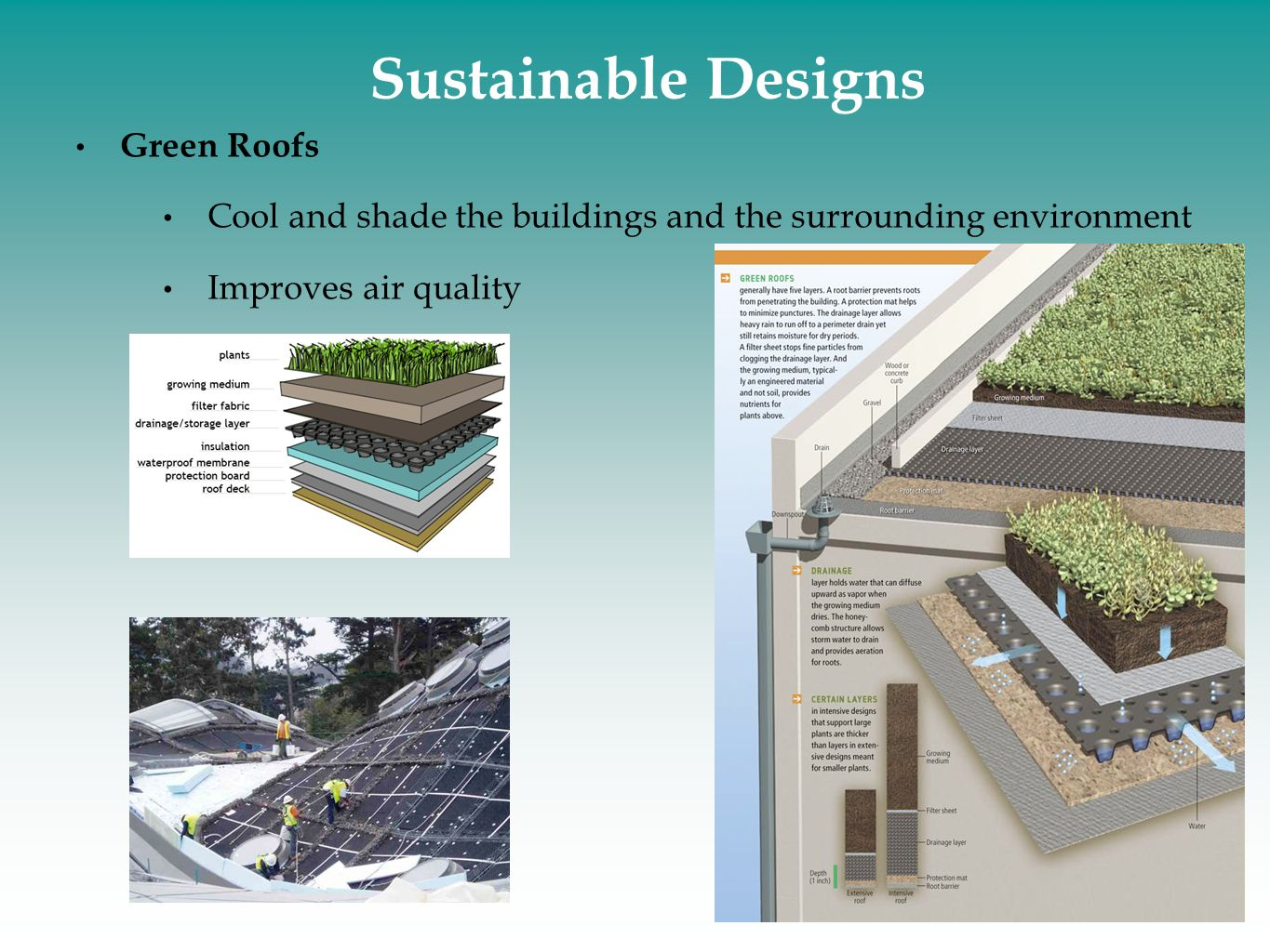 Sustainable Designs Green Roofs