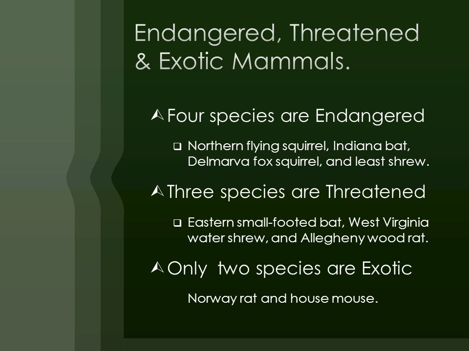Endangered, Threatened & Exotic Mammals.