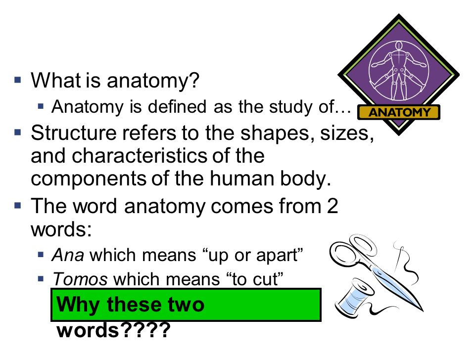Funky Anatomy And Physiology Vocabulary Dictionary Frieze Anatomy