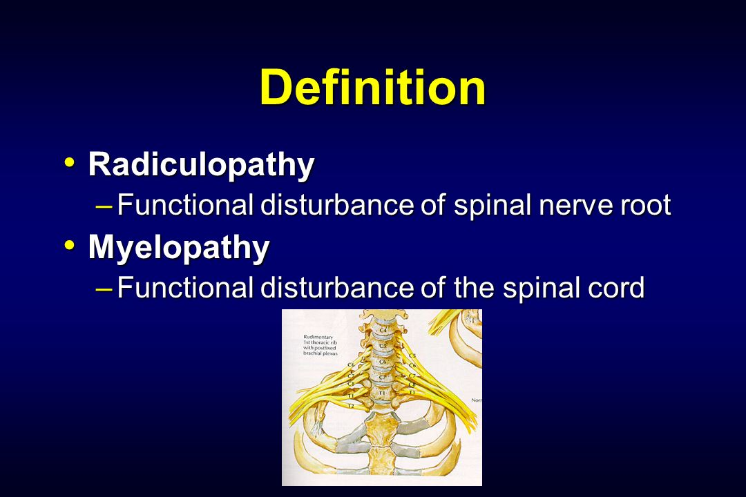 Functional anatomy definition