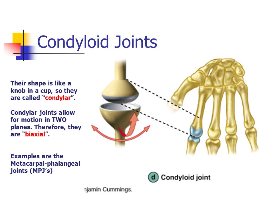joints and articulations - ppt download, Cephalic Vein