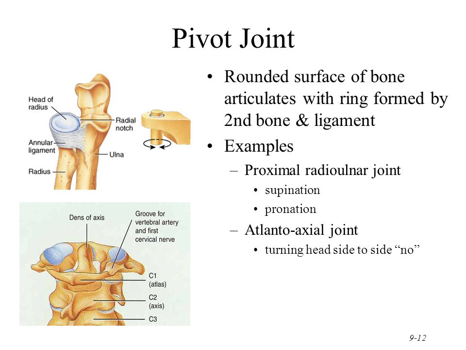 Examples Of Pivot Joints | Prephockey.org