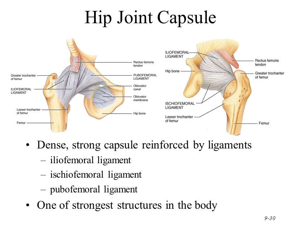 Ligaments Of The Hip Joint Choice Image - human anatomy organs diagram