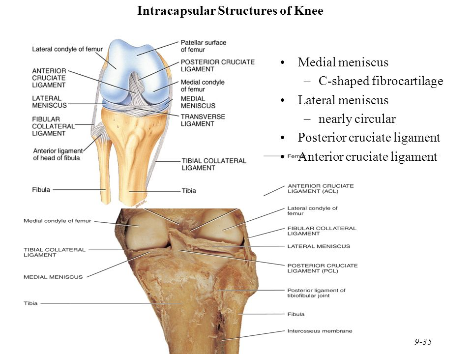 Chapter 9 Joints Joints hold bones together but permit ... Hinge Joint Knee