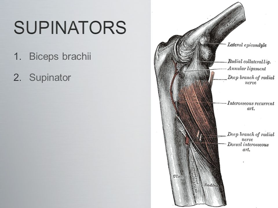 pronator quadratus and supinator relationship trust