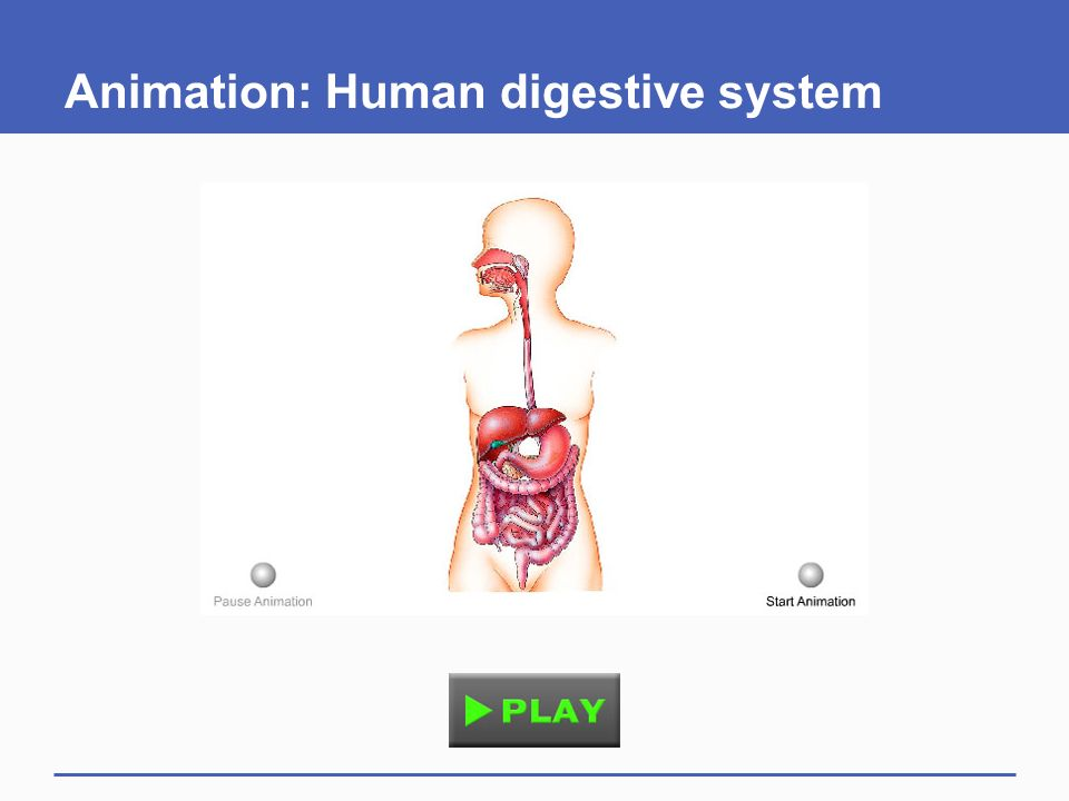 Digestion and nutrition ppt video online download 71 animation human digestive system ccuart Choice Image