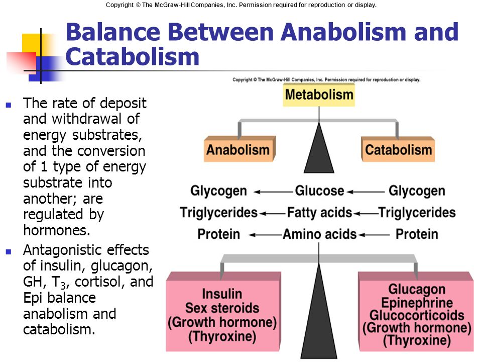 what is the relationship between anabolism catabolism and metabolism