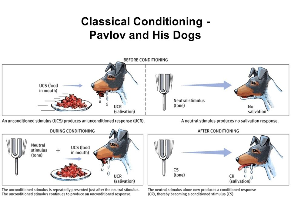 pavlovs dog essay Enjoy the best ivan pavlov quotes at brainyquote quotations by ivan pavlov, russian psychologist, born september 14, 1849 share with your friends.