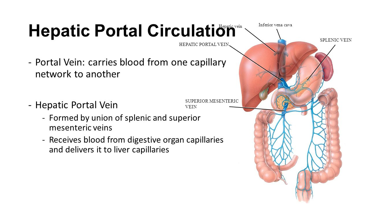 hepatic portal circulation Hepatic portal system  many drugs that are absorbed through the gi tract are substantially metabolized by the liver before reaching general circulation.
