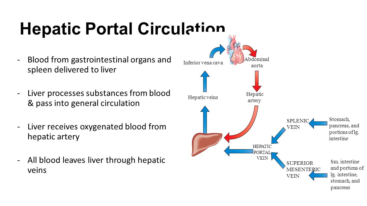 liver and spleen diagram ch 16.3: circulatory routes - ppt download liver blood flow diagram