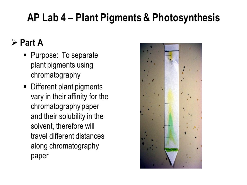 ap bio essay on photosynthesis Photosynthesis is affected by light intensity, water, and temperature plants grow  more abundantly because the weather is warm carbon dioxide given off by.