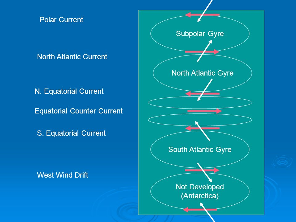 North Atlantic Gyre South Atlantic Gyre. Subpolar Gyre. Not Developed. (Antarctica) Polar Current.
