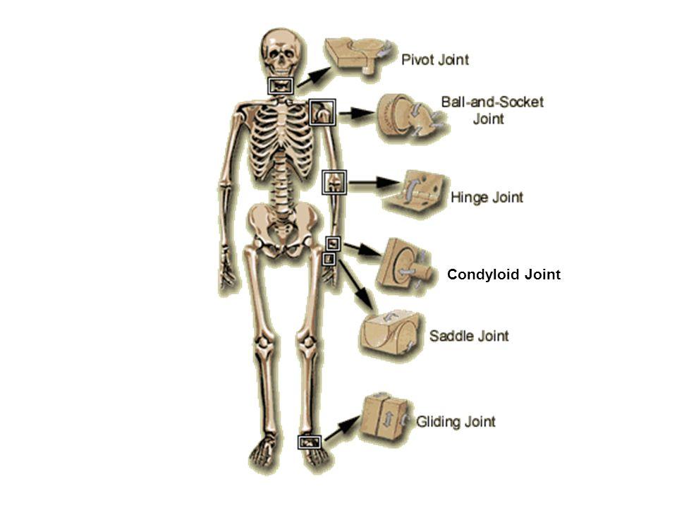 skeletal system radtech-board.ohd.hr.state.or. - ppt download, Sphenoid
